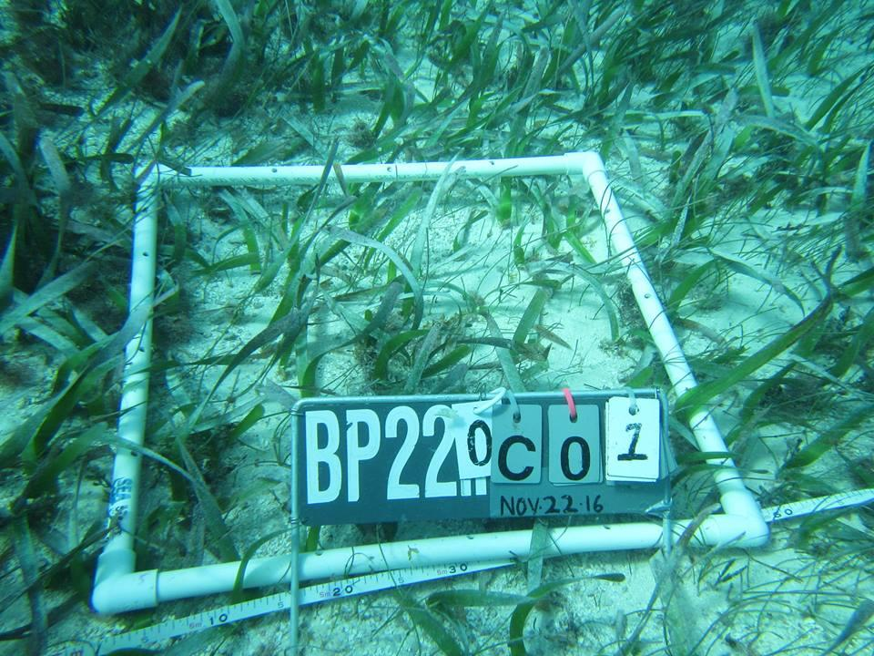 A male volunteer from Projects Abroad has pictured a project he set up to monitor sea grass growth as part of his marine conservation work in Belize.